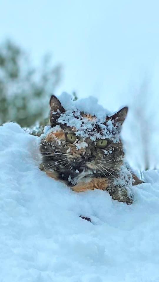 Наша снігова красуня та помічниця